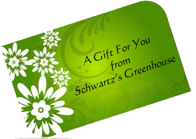 Schwartz Greenhouse & Garden Center gift card