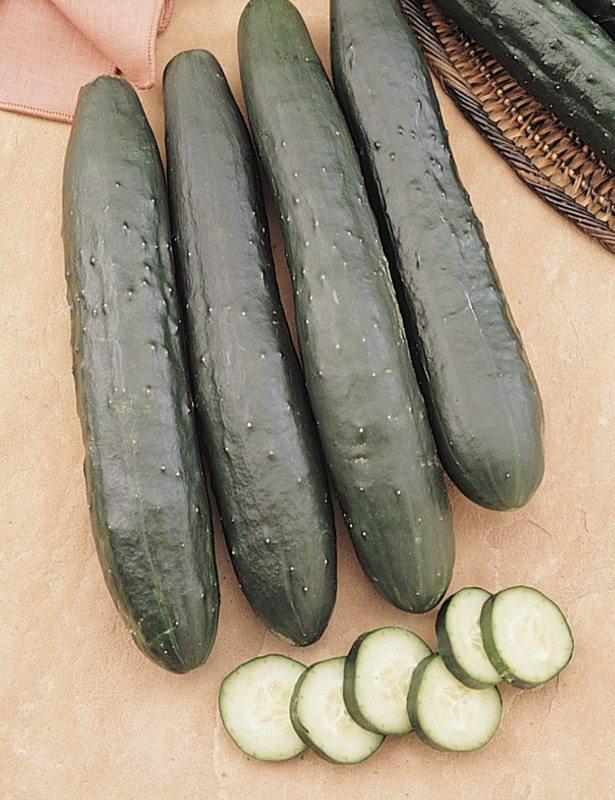 Cucumbers, Burpless
