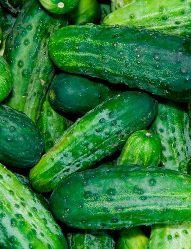 Cucumbers, Bush