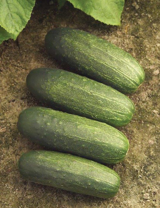 Cucumber, Peppi