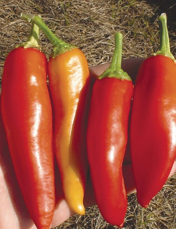 Peppers, Hungarian Hot