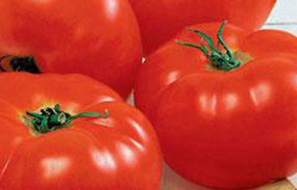 Tomato, Big Boy