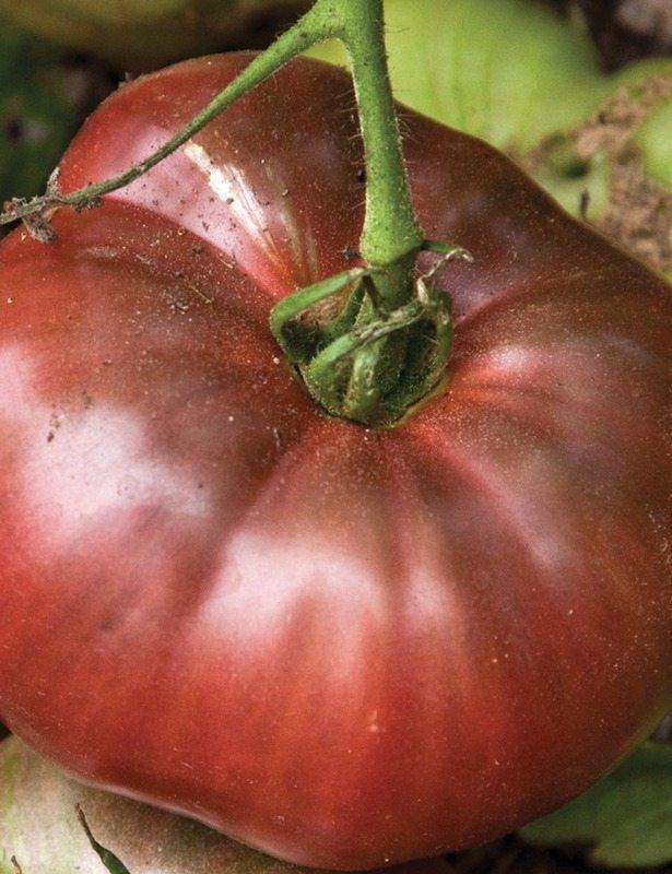 Tomato, Cherokee