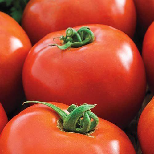 Tomato, Husky Red Cherry