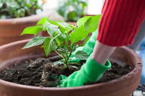 plantcare2