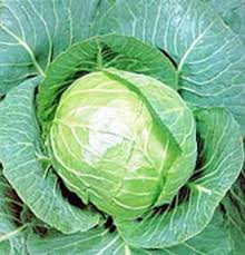 Cabbage, Gold Acre