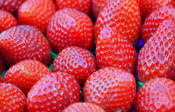 Strawberries, Everbearing & Junebearing