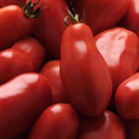 Tomato, San Marzano