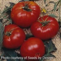 Tomato, Brandywine