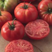 Tomato, Champion