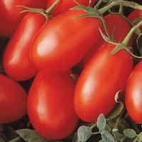 Tomato, LaRoma