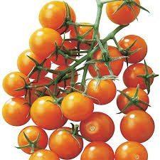 Tomato, Sun Sugar