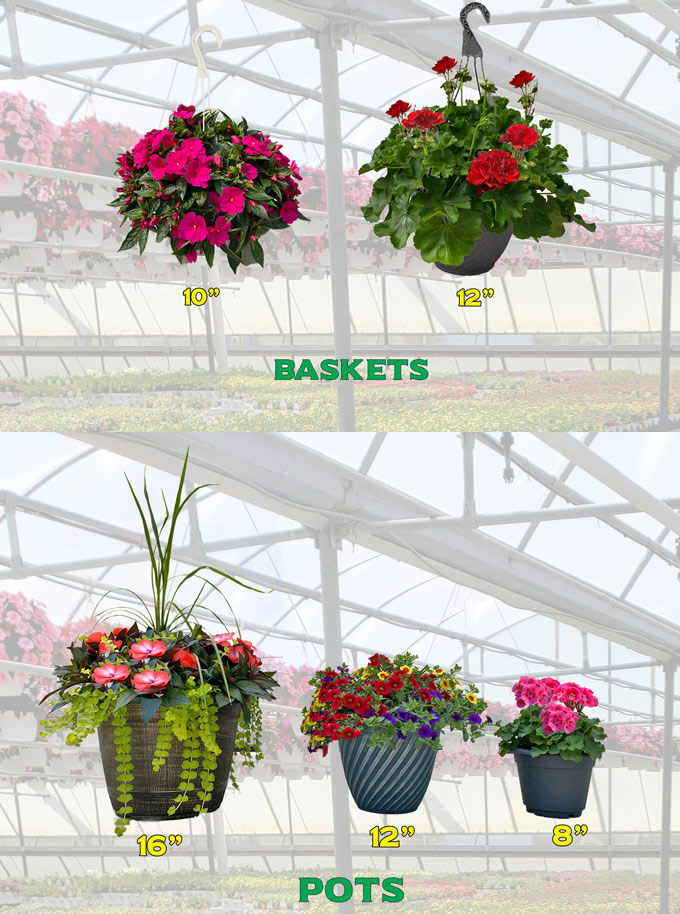 Schwartz Greenhouse pot sizes