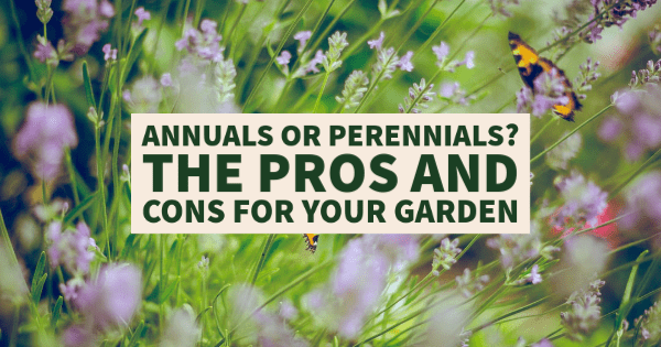 Annuals or Perennials