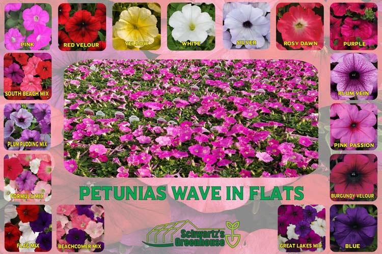Petunias, Wave In Flats